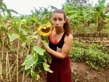 Wilted | Bikira, Uganda